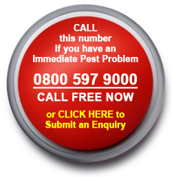 Emergency Pest Control - Click Here Now
